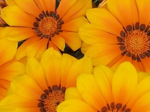 flowers, daisies, yellow, kindness, gift, blessings, random acts, inspiration