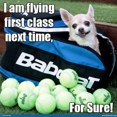 Babolat tennis bag, US Open, dog, Chihuahua